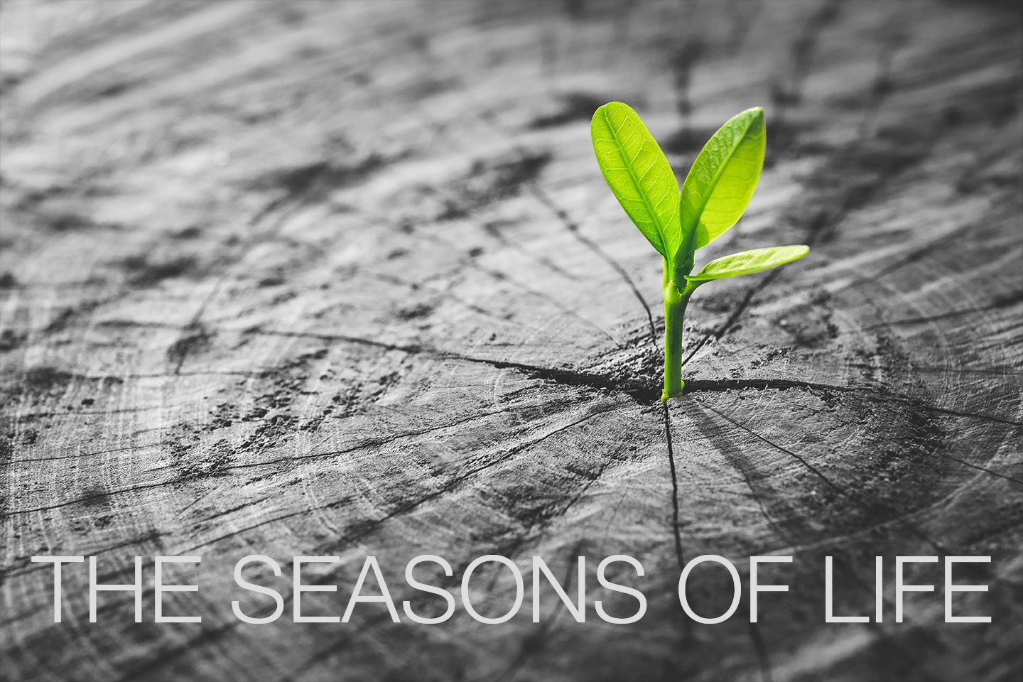 Seasons of Life project